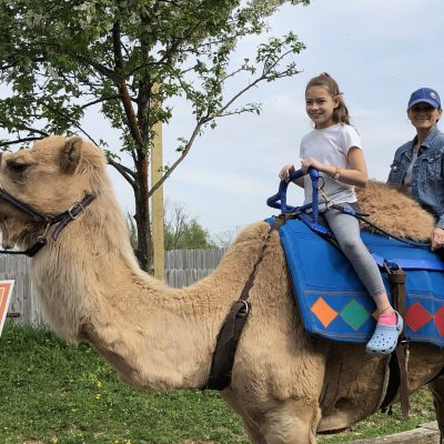Shannon the Camel